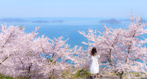 a woman in a white dress in front of cherry trees overlooking the seto inland sea