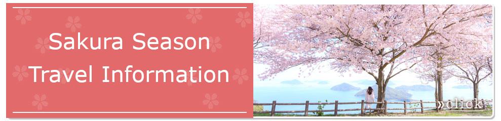 Mt. Shiude sakura season travel information