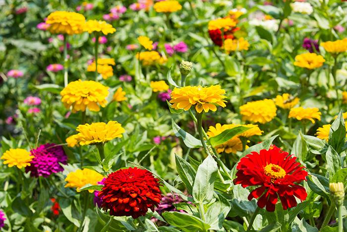 ▲島のいたるところに花が