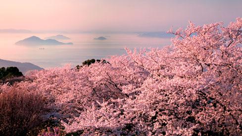 春には世界が認めた桜と多島美の「紫雲出山」
